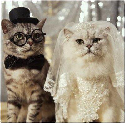 catfun-wedding